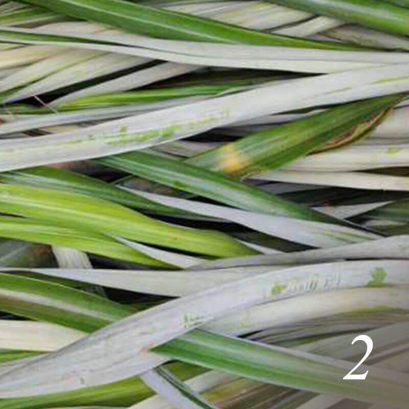 パイナップル葉繊維ができるまで パイナップルの葉