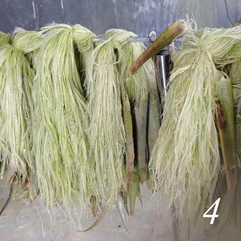 パイナップル葉繊維ができるまで パイナップルの葉から繊維